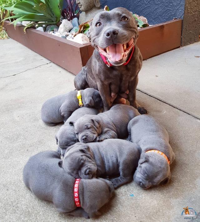Maman très fière de ses bébés