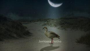 Gimp Stimmung in Bildern erzeugen Nachtszene