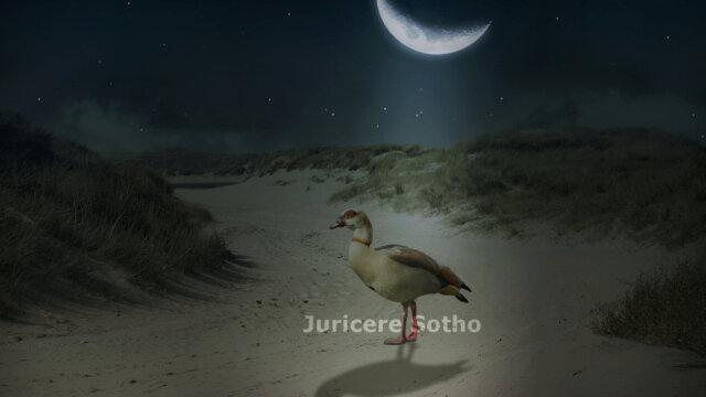 Main photo Gimp Stimmung in Bildern erzeugen Nachtszene
