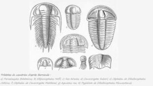 Généralités sur les trilobites