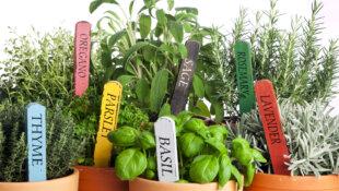 Il profumo dell'orto in cucina: le piante aromatiche