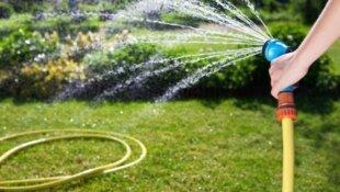 Как правильно поливать растения.