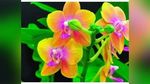 Main photo Орхидеи. Советы цветовода.