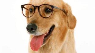 Кошки и собаки на даче. Советы ветеринара.