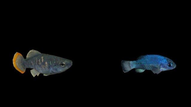 American Southwest Desert Fish