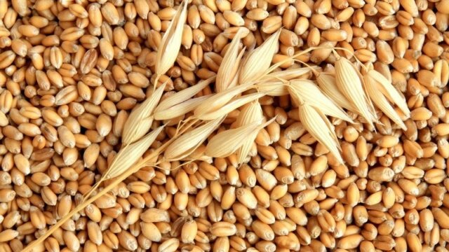 Du grain de blé à la farine de blé