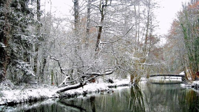 Bien pêcher la carpe en rivière ( 3/ l'hiver)