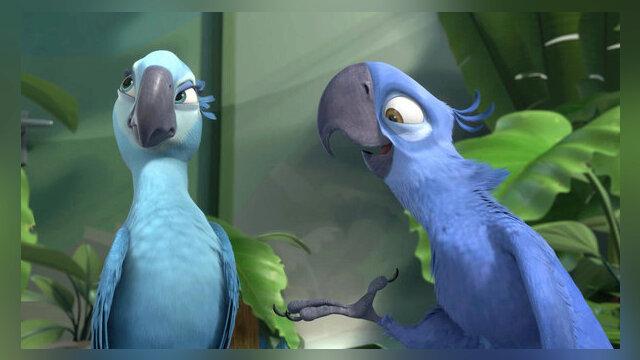 L'Ara de Spix, l'oiseau star de Rio fait partie des espèces disparues