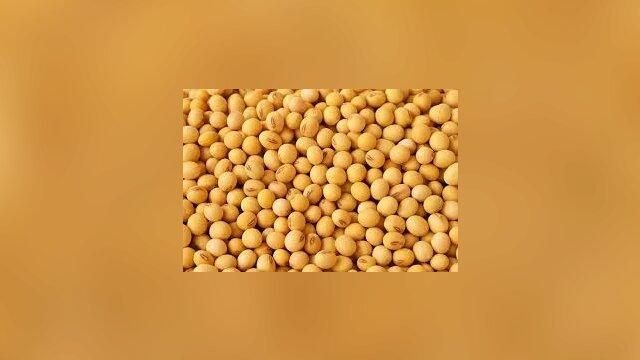 China slashes 2018/19 soybean import forecast as U.S. trade war crimps buying