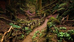 Ces forêts qui vont vous donner envie de communier avec la nature