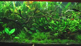 Qu'est ce qu'un aquarium LowTech ?