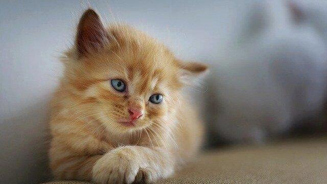 Peut-on laisser un chat seul ?