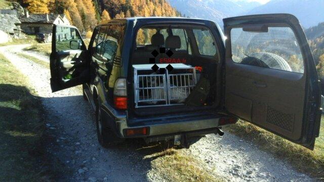 Main photo Cage de transport pour chien ESRAA