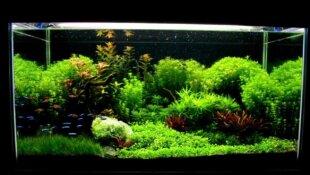 Les Bienfaits des aquariums sur la santé