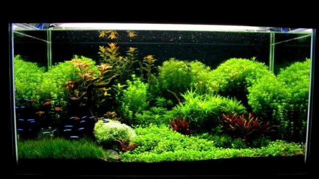 Main photo Les Bienfaits des aquariums sur la santé