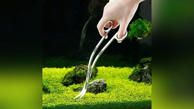 Plantes qui donnent l'effet de tapis dans l'aquarium